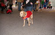 23rd Annual Costume Contest for Dogs 5