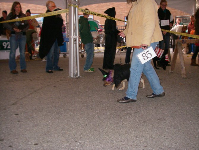 23rd Annual Costume Contest for Dogs, October 28, 2011