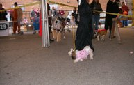 23rd Annual Costume Contest for Dogs 30