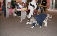 23rd Annual Costume Contest for Dogs 19
