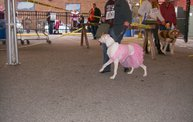 23rd Annual Costume Contest for Dogs 14