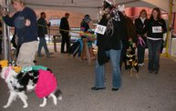 23rd Annual Costume Contest for Dogs 12