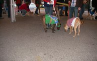 23rd Annual Costume Contest for Dogs 17