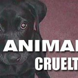 Animal Cruelty Graphic