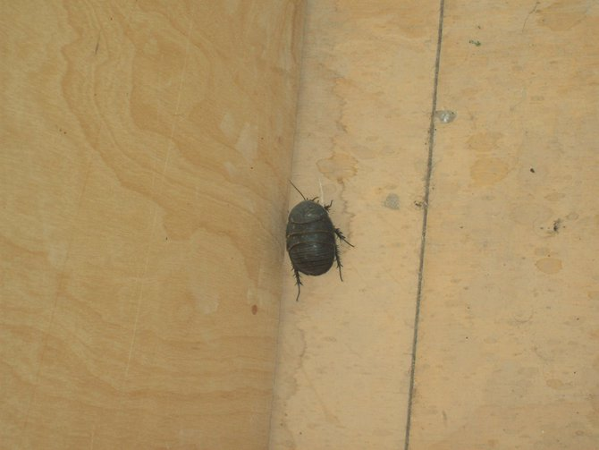 I'm not sure a machine gun would be enough to stop this bug outside our room. It was about the size of a fat mouse...