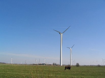 Cow with wind turbines, Dithmarschen By Dirk Ingo Franke (photo taken by Dirk Ingo Franke) [CC-BY-SA-2.0-de (http://creativecommons.org/licenses/by-sa/2.0/de/deed.en)], via Wikimedia Commons