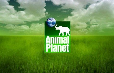 Local dog stars on Animal Planet tv show - News - WSAU