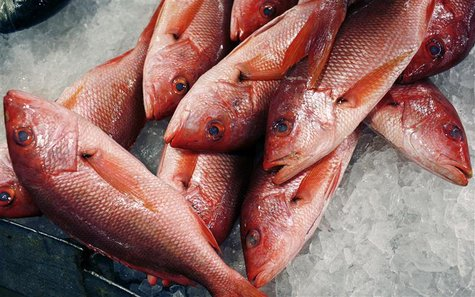 Red snappers lay on ice for sale at JMS Seafood, a fish wholesaler in the New Fulton Fish Market in the Bronx section of New York City