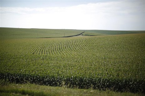 A field of corn is shown in Iowa