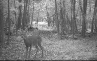 Trail Cam 3