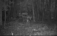 Trail Cam 7