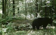 Trail Cam 29