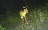 Trail Cam 10