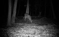 Trail Cam 5