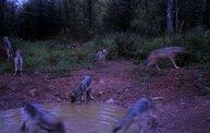 Trail Cam 1