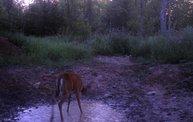 Trail Cam 30