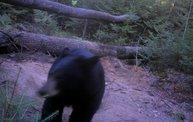 Trail Cam 16