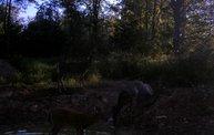 Trail Cam 21