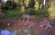 Trail Cam 2