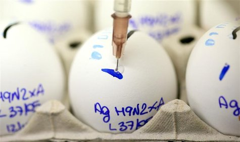 Scientist checks eggs for bird flu at the Zooprophylactic Institute near Padua
