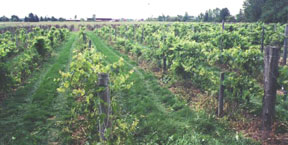 Trout Springs Winery in Greenleaf. Owner Steve Debaker authored the Wisconsin Ledge AVA application.