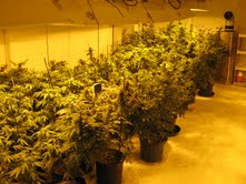 Sophisticated pot growing operation found in South Haven Township