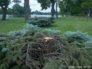 Trees illegally cut down in Menasha's Jefferson Park are seen, May 31, 2012. (courtesy of FOX 11)