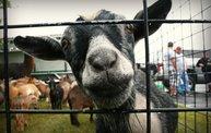 Sheboygan Harborfest 2012 29