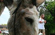 Sheboygan Harborfest 2012 4