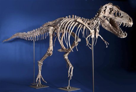 An eight-foot tall, 24-foot long, 75% complete Tyrannosaurus bataar skeleton is seen in this undated handout photo from Heritage Auctions in