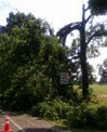 Storm Damage 2012: Cover Image