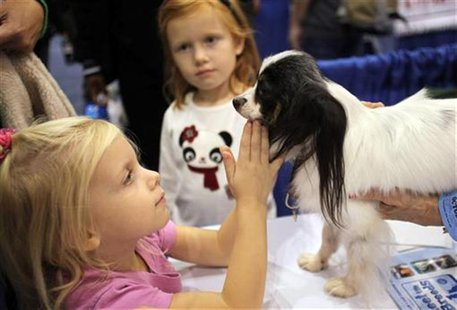 "A girl pets a Papillon dog at the ""Meet the Breeds"" exhibition in New York October 17, 2009. REUTERS/Natalie Behring"