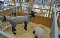 Wisconsin Valley Fair 2012 4