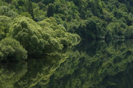 Trees are reflected in the still waters along a river near Eugene, Oregon July 1, 2008. REUTERS/Mike Blake