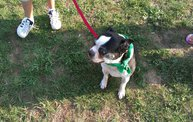 Paws on the Path 2012 16