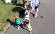 Paws on the Path 2012 4