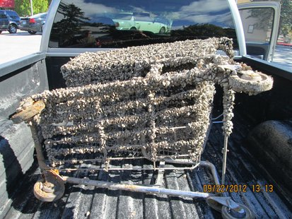 Zebra Mussel Encrusted Shopping Cart