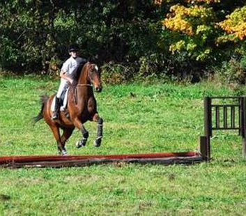 "Photo of missing show horse ""Hondo"" (photo courtesy Susan Canole)"