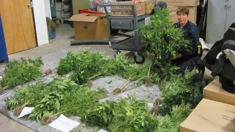 State police Seize plants