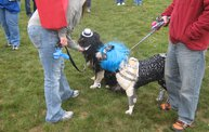 Q106 at C.A.H.S. Run & Walk For Animals (10-6-12) 14