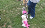 Q106 at C.A.H.S. Run & Walk For Animals (10-6-12) 11