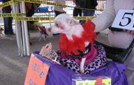 Doggie Costume Contest 2012 26