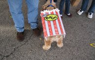 Doggie Costume Contest 2012 25