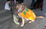 Doggie Costume Contest 2012 22