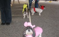 Doggie Costume Contest 2012: Cover Image