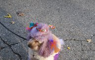 Doggie Costume Contest 2012 19