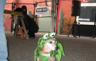 Doggie Costume Contest 2012 30