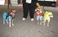 Doggie Costume Contest 2012 18