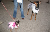 Doggie Costume Contest 2012 13