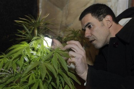 Marijuana grower and activist Juan Vaz checks a Marijuana plant using a cell phone for light in Montevideo in this August 9, 2012 file photo
